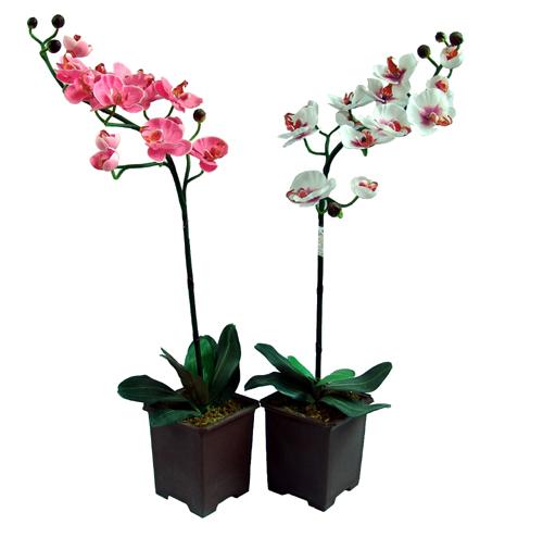 Орхидеи: http://demo-css.ru/market/komnatnye_cvety/orhidei/